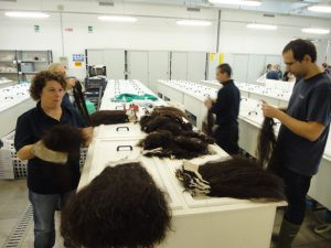 Preparing the hair for the depigmentation bath